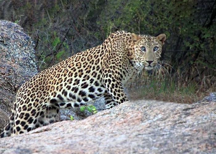 best jungle resorts in Rajasthan